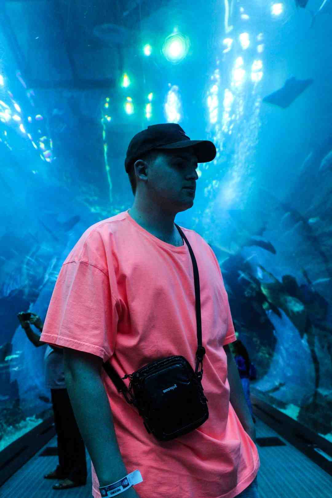 Pourquoi mettre de la lumière dans l'aquarium?