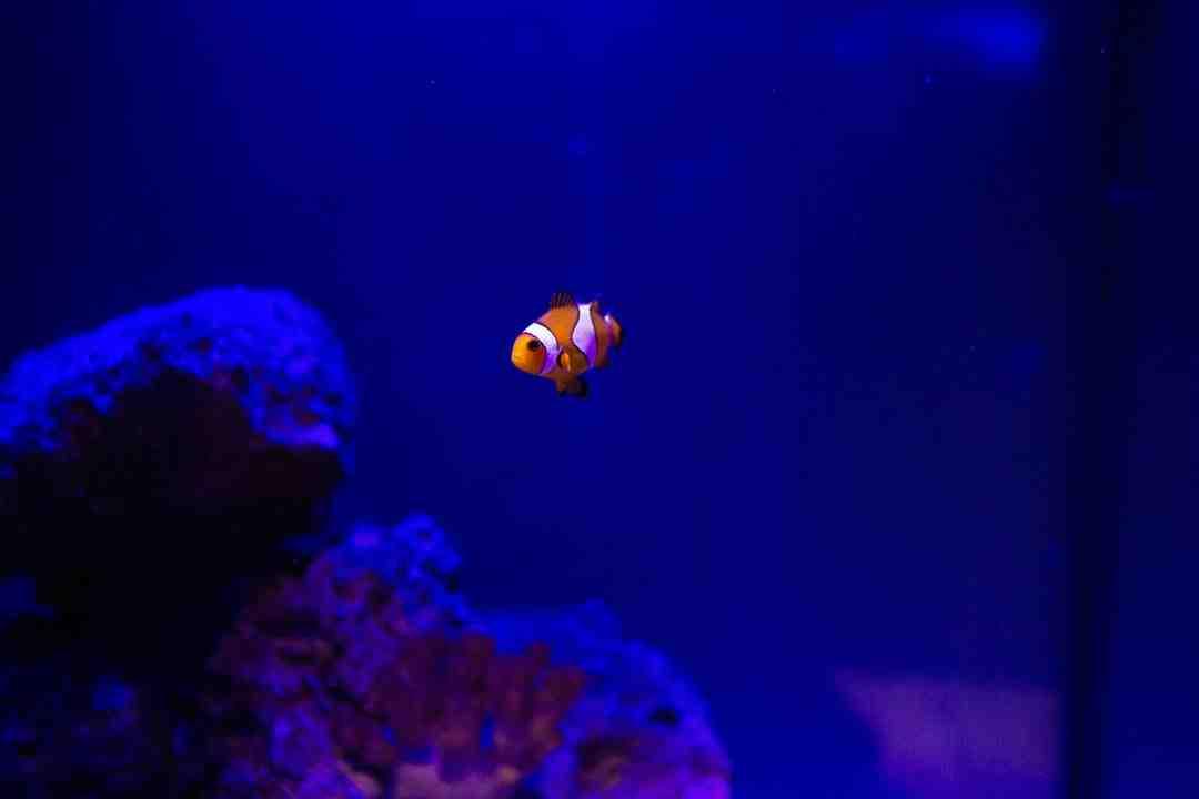 Pourquoi mettre de la lumière dans un aquarium?