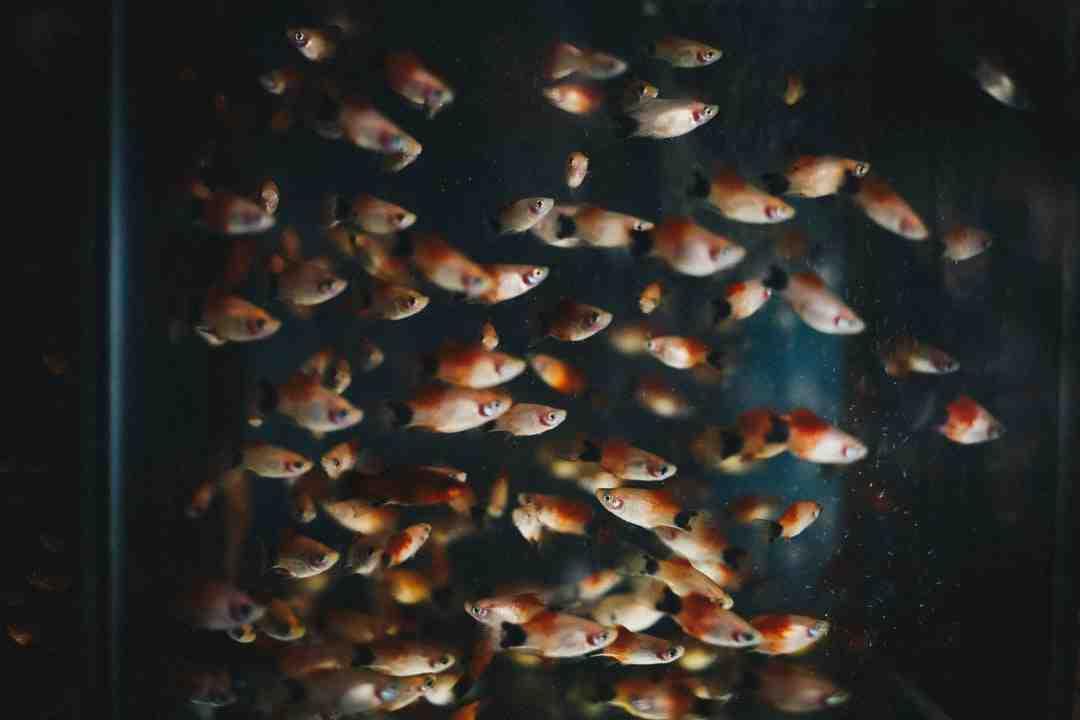 Quand allumer la lumière de l'aquarium