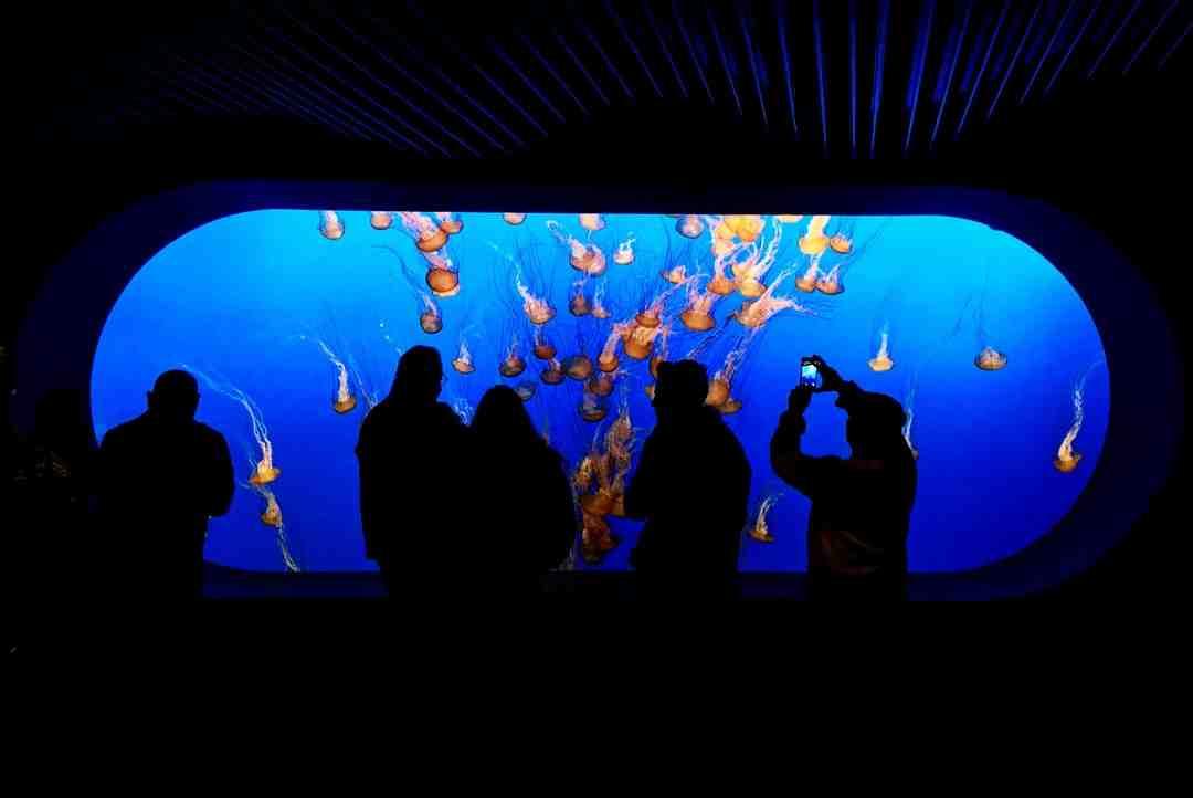 Quand les poissons seront-ils mis dans l'aquarium?