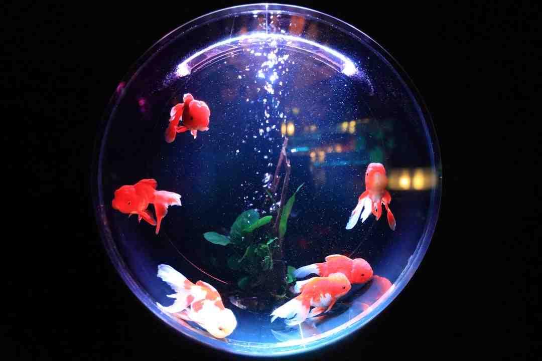 Que sont les lumières LED pour les aquariums coralliens?