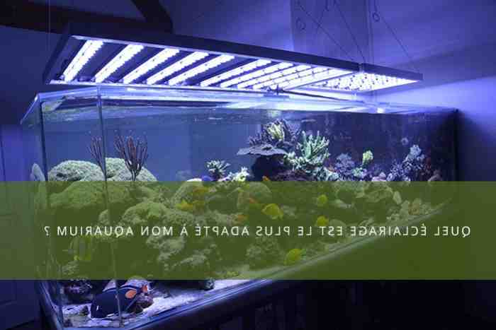 Quel genre de lumières pour un aquarium?