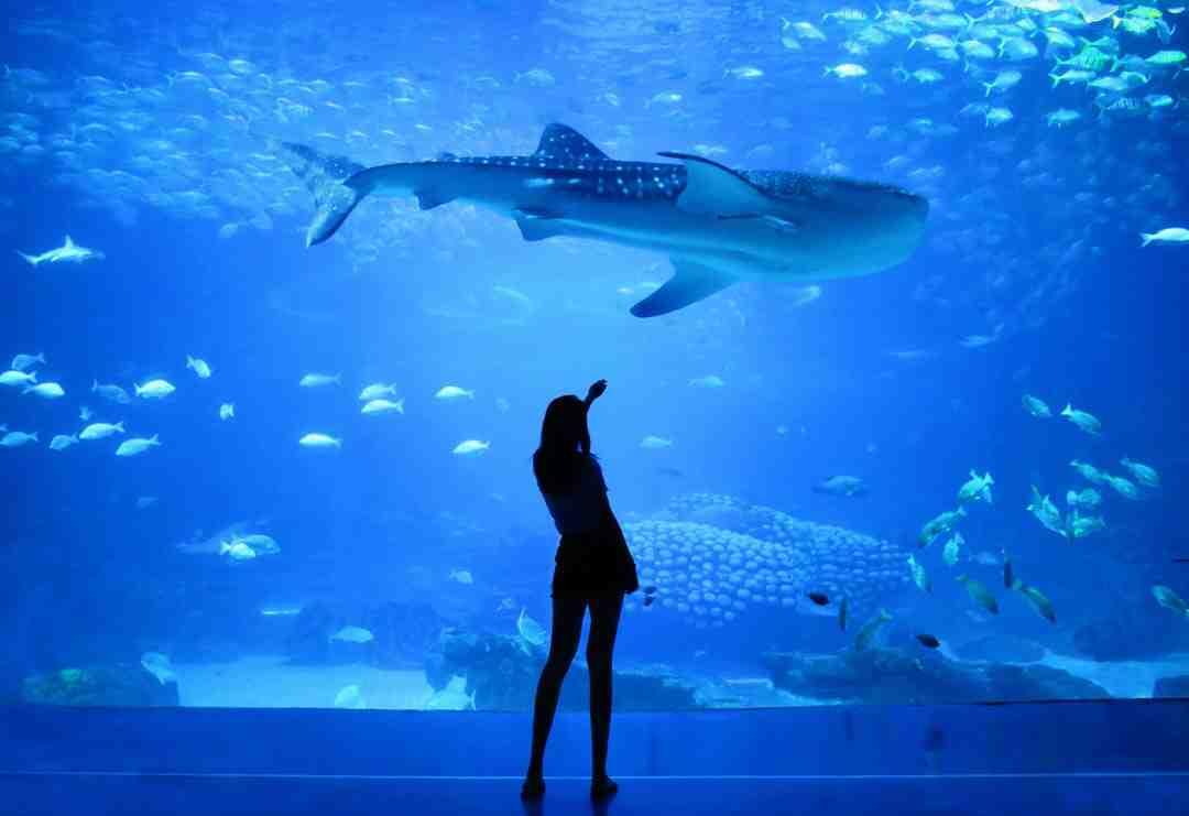 Quels sont les appareils d'éclairage de l'aquarium?